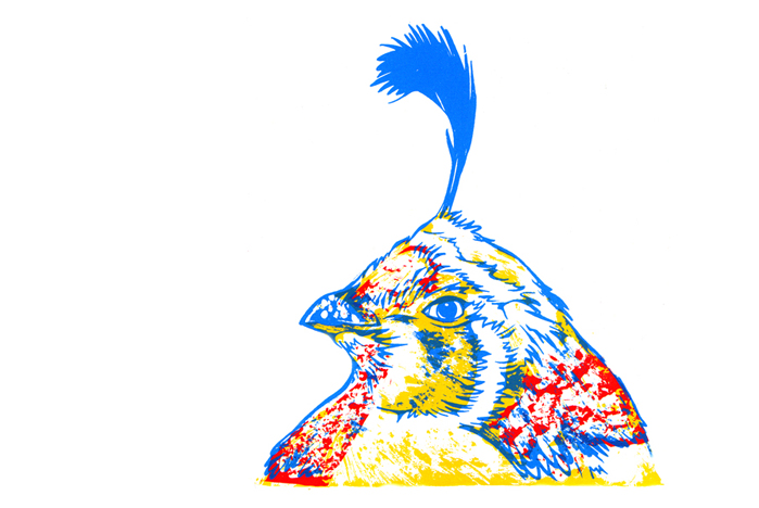 californian_quail2